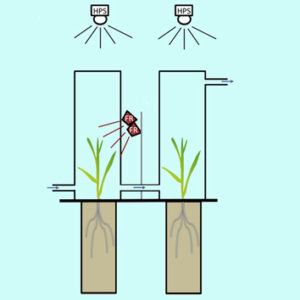 Light quality, volatile emissions and plant–plant interactions