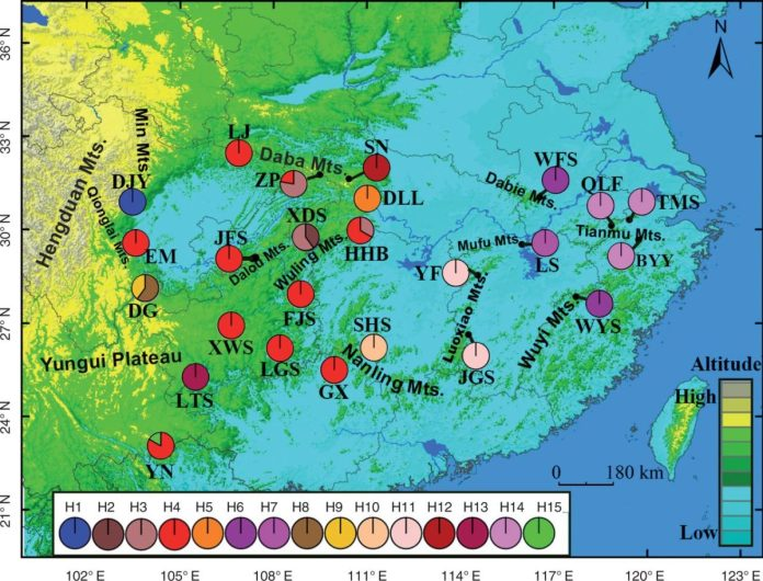 the geographical distribution of the plastid DNA haplotypes among populations of Tapiscia sinensis