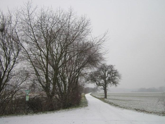 Silberweiden (Salix alba) und Birnbaum im Hockenheimer Rheinbogen