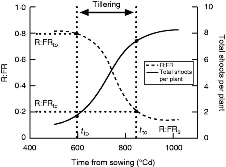 Dynamics of tillering and red/far-red ratio (R:FR) at the base of the canopy in the mapping population of 'Forno' and 'Oberkulmer'.