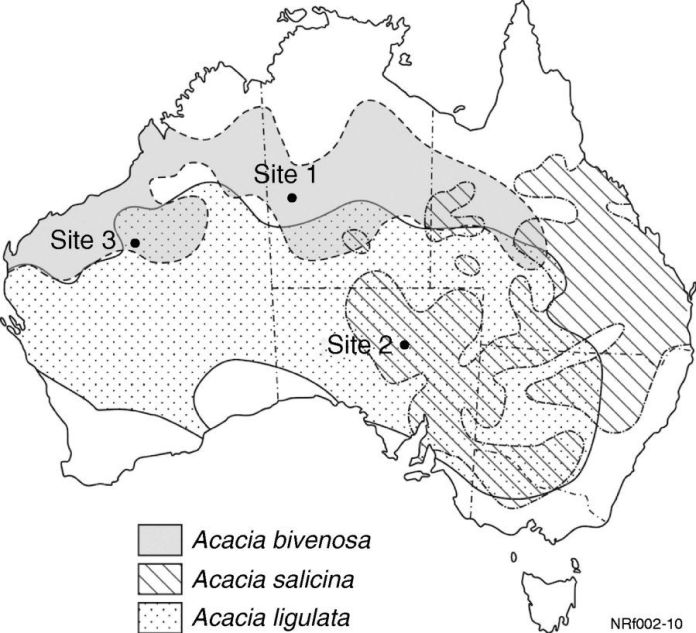 Spatial distributions of the most dominant A. bivenosa group members, adapted from Moore (2005). Vegetation survey locations are indicated as site 1 (Tanami Desert), site 2 (Stuart Shelf) and site 3 (Great Sandy Desert).