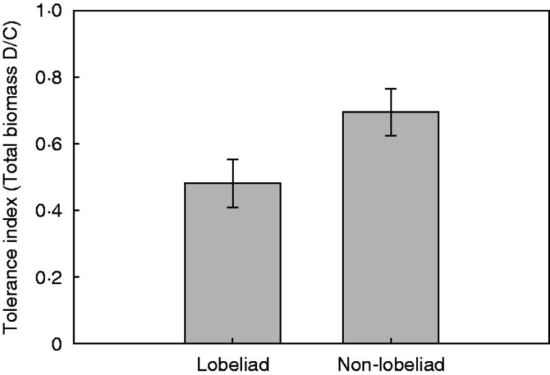 Mean levels of tolerance, quantified as the ratio of damaged/control plant means, for lobeliad species in the Campanulaceae family compared with all other species.