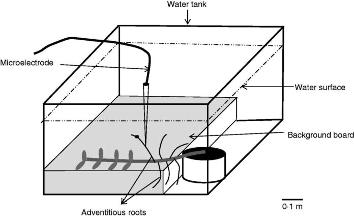 Schematic representation of the experimental set-up for profiling of the oxygen gradient towards an adventitious root surface under water.