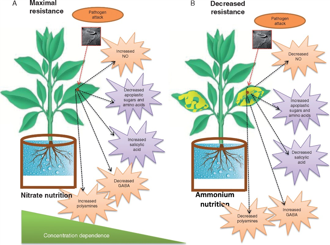 the role of nitrogen in plant defence « botany one