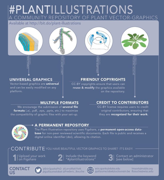 Plant Graphics Infographic