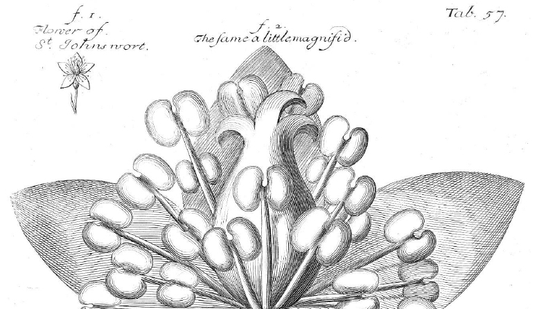 Hand-outs: Coloring pages of historical herbals – Botany Depot