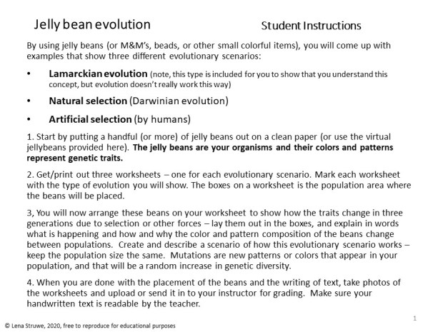 LenaStruwe jelly bean evolution assignment p1