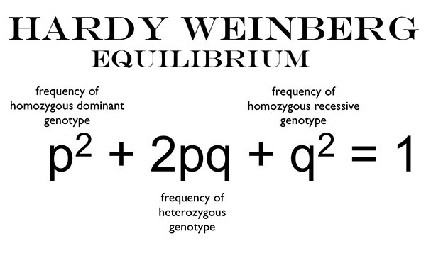 Image result for equation for hardy-weinberg