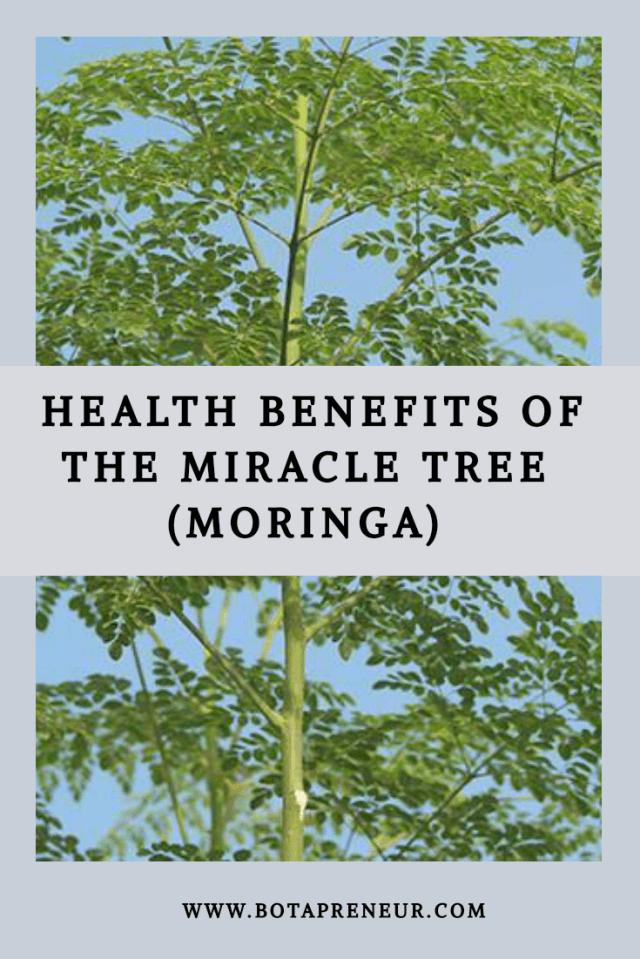 Health Benefits of the Miracle Tree (Moringa)