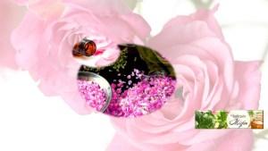 Rosa de Bulgaria damascea botiquinmagico Vidya Marta López Bruletout