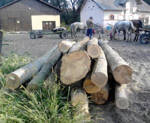 lemne fara documente (2)