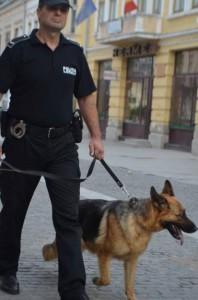 politie locala caini