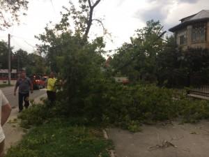 copac cazut pe bulevardul mihai eminescu din botosani1