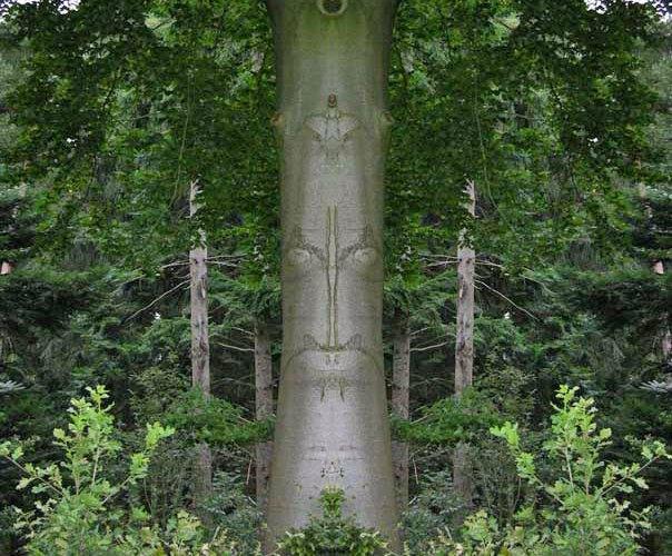 Gespiegeltes Bild eines Baumwesens