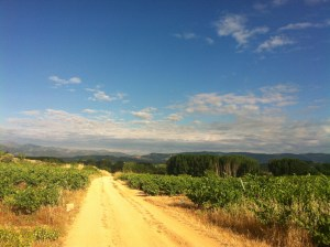 Compostelle - Camino Frances