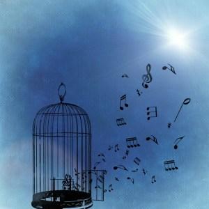 liberté - cage