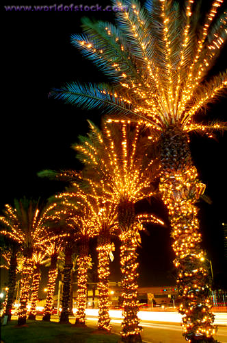 Christmas Lights Palm Tree