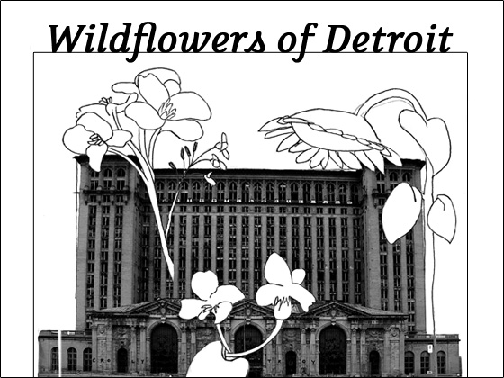 Wildflowers of Detroit