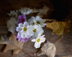 autumn-cosmos-bouquet-bottle-branch