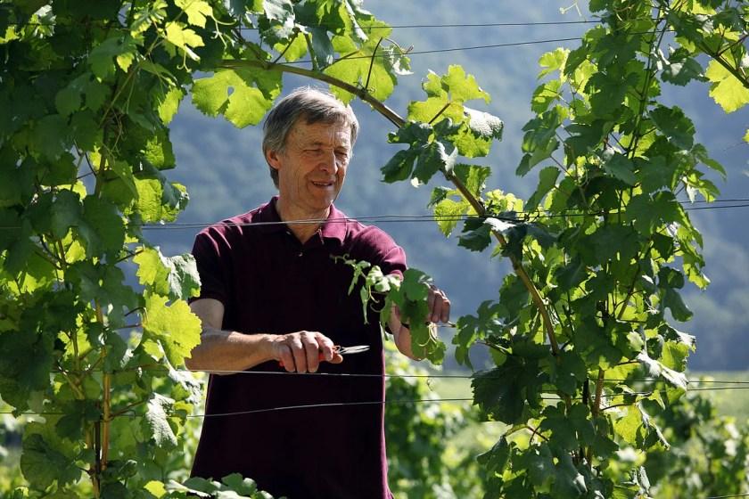 Winzer Leo Alzinger im Weingarten in der Wachau