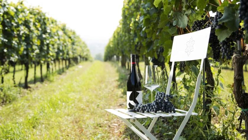 Blick in die Reben beim Weingut Walter Glatzer aus dem Carnuntum.