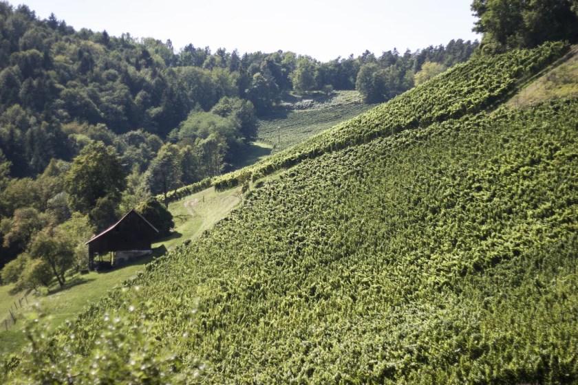 Ried Kranachberg in der Südsteiermark
