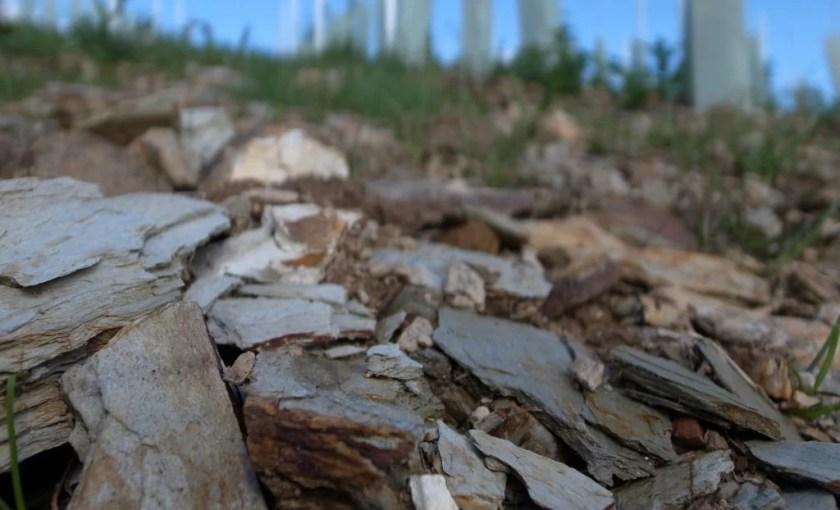 Schiefer-Gestein im Sausal in der Südsteiermark