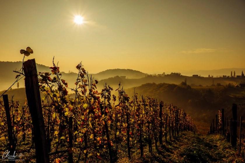 Blick über die Rieden der Südsteiermark im frühen Morgen.