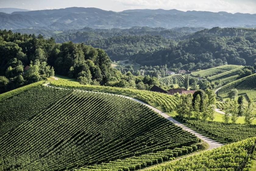 Vogelperspektive der Weinlage Ciringa in Slowenien