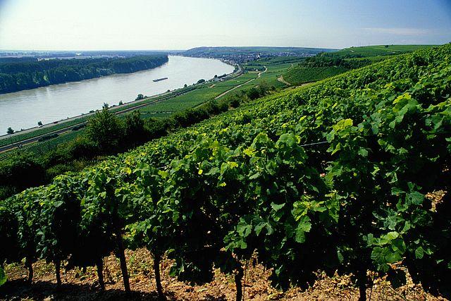 Roter Hang und der Rhein