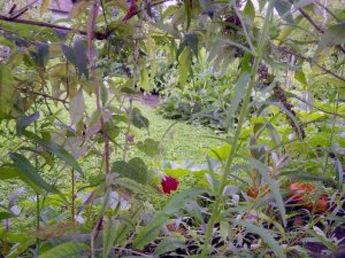 plantes-et-legumes
