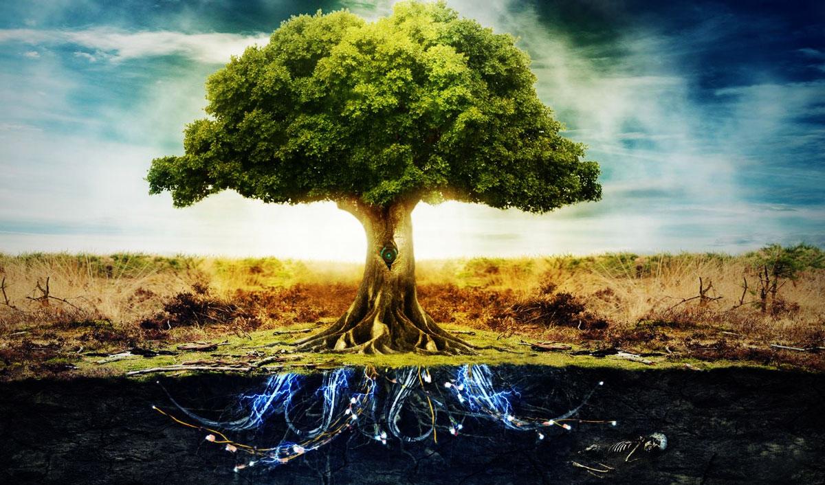 """Résultat de recherche d'images pour """"arbre spirituel"""""""