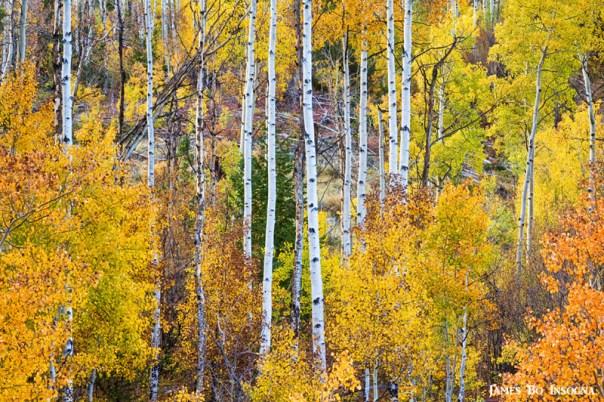 Aspen Tree Autumn Magic Scenic Landscape View