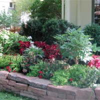 Shady Secrets: Growing successful shady gardens