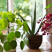 Refresh with Indoor Plants