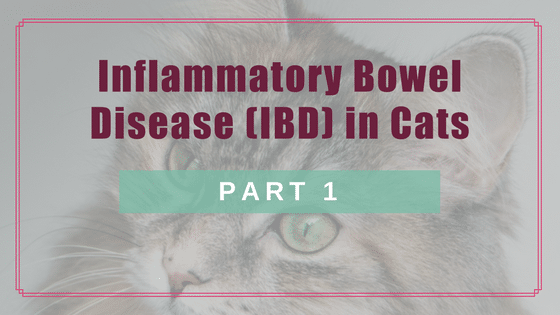 Inflammatory Bowel Disease (IBD) in Cats: Part 1