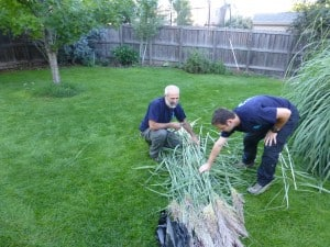 Rami and Gilad cut grasses for lulav