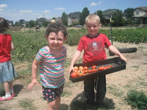 Young volunteers show their tomato harvest.