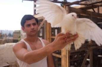 dove flyer 3