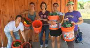 Milk and Honey Farm Donates Half-Ton of Organic Vegetables