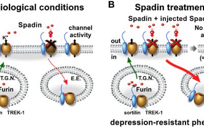 2/7/20 SHR # 2466 :Treating Major Depressive Disorder With peptides