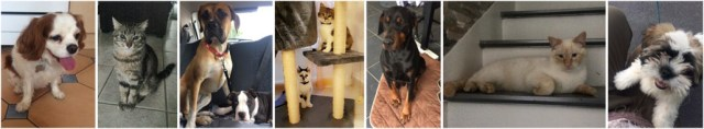 Photos de chat et chien