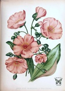 Fleur Test de personnalite MBTI