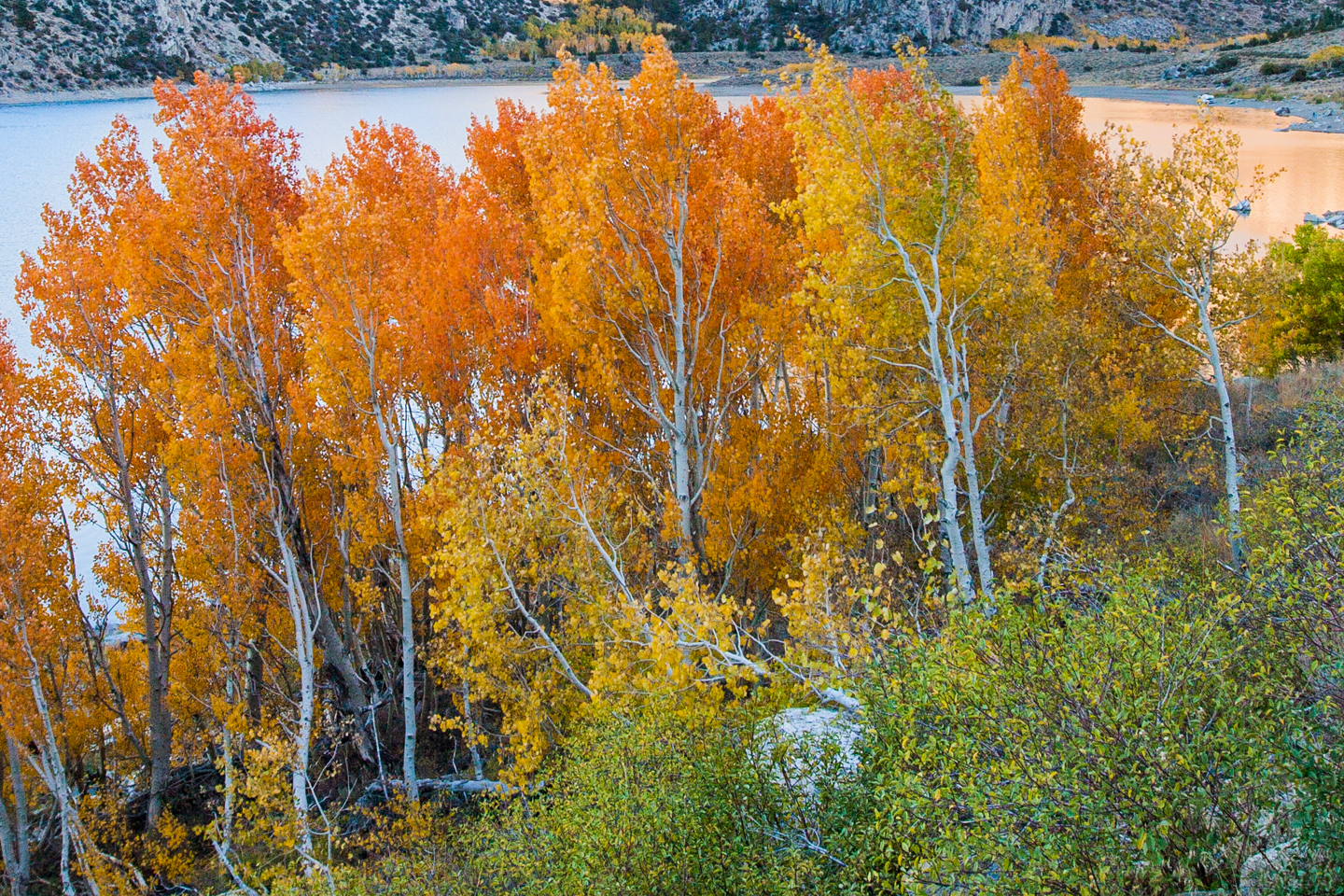 Time Travel Tuesday | Fall Colors in the Eastern Sierras, California