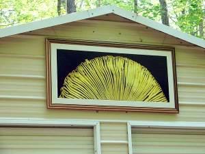 mushroomframed