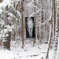 Deer skull in winter