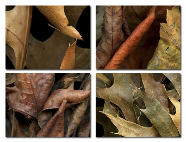 Leaves Placemats