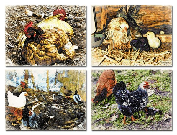 Chickens Placemats