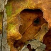 Leaves after Dali