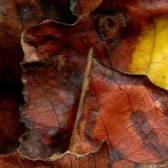 Leaves after Marc